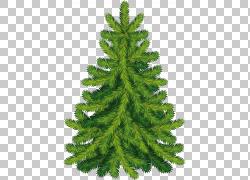 手绘圣诞树冷杉图片