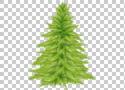 圣诞树冷杉图片