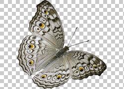 手绘水彩蝴蝶昆虫动物免抠元素PNG