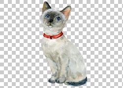 可爱戴着红色项圈的猫png素材