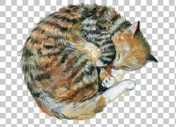 蜷缩睡觉的猫png