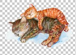 手绘两只睡觉猫咪png