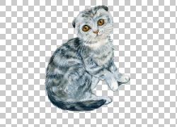 手绘灰色布偶猫png素材,