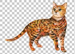 斑点猫咪绘画