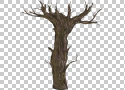 干枯树枝插画png素材