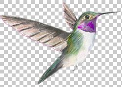 手绘水彩蜂鸟png素材