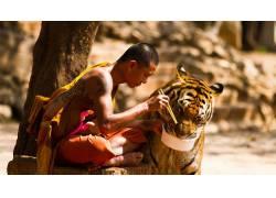 和尚,动物,吃,虎,树木,黥,筷子,坐在,景深,中国63108图片