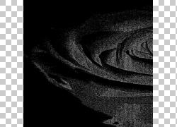 花园玫瑰T恤剪花,T恤PNG剪贴画单色,花卉,玫瑰订单,郁金香,spread