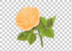 玫瑰花,桃花PNG剪贴画白色,摄影,橙色,花卉,royaltyfree,玫瑰订单图片