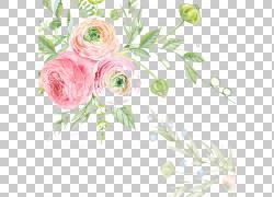 婚礼邀请水彩绘画绘画花,玫瑰,粉红色花瓣的照片在绽放PNG剪贴画
