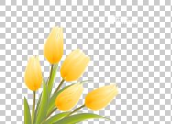 英迪拉・甘地纪念郁金香花园花卉插图,郁金香,黄色的花朵插图PNG