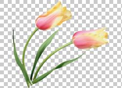郁金香花卉绘画,郁金香材料地图演绎材料PNG剪贴画紫色,植物茎,郁