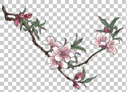 桃花绘图,梅花创意卡通的PNG剪贴画卡通人物,插花,分支,植物茎,漫图片