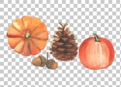 秋天例证,秋天收获季节PNG clipart水彩画,橙色,装饰,收获,葫芦,图片