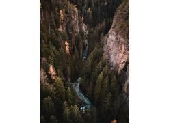 森林壁纸图片