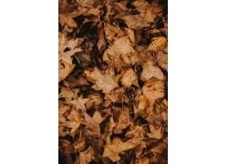 枫叶壁纸图片