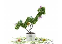 花卉和纸币