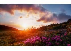 森林鲜花山坡黄昏晚霞唯美图片