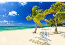 夏日 大海 椰树 风光