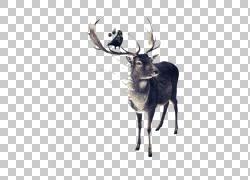 手绘鹿动物插画png图片