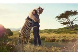 男虎,阳光,动物,拥抱,性质844图片