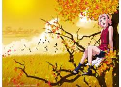 动漫,火影忍者疾风传,春野樱,秋季,动漫,动漫女孩46997图片