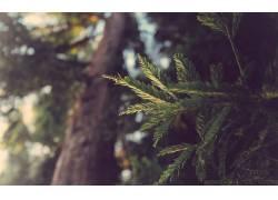 宏,树叶,景深,性质,景观,红木,树木,阳光,针叶树,植物,木5601