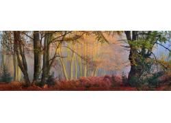 薄雾,森林,秋季,树木,太阳光线,早上,灌木,全景,性质,景观192854