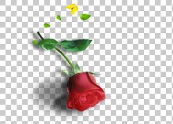 粉色红色,玫瑰PNG剪贴画戒指,心,海报,电脑壁纸,心,花卉,抽象,我图片