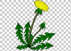 常见的蒲公英,花卉杂草的PNG剪贴画叶,草,植物茎,卡通,免版税,股图片