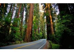 路,红杉,红木,性质,景观,森林25147
