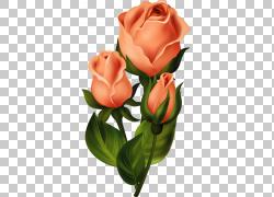 花艺设计花园玫瑰,花PNG剪贴画插花,剪纸,人造花,植物茎,花,画,花图片