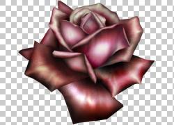 花园玫瑰,美丽的红玫瑰,粉红玫瑰图PNG剪贴画电脑壁纸,花卉,桌面图片