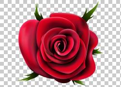 花园玫瑰,透明玫瑰,红玫瑰花PNG剪贴画剪贴画,电脑壁纸,花卉,桌面图片