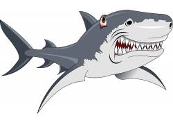 矢量鲨鱼素材图片
