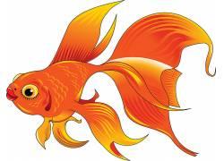 金鱼矢量图图片