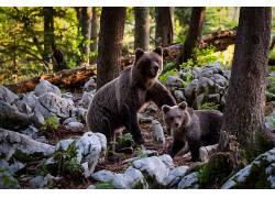 森林动物图片图片