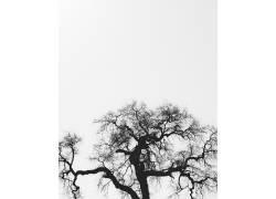 墨迹树木素材