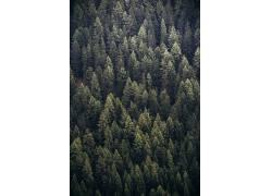 树林图片摄影素材图片