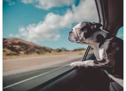 道路上小狗在车上