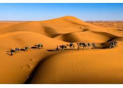 蓝色天空 人物沙漠队摄影图片图片
