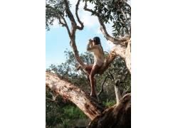 坐在树木上的女人用手机拍摄