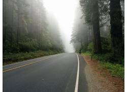 人物骑自行车 马路中间黄色交界线 路旁白色线树林树木摄影图片图片