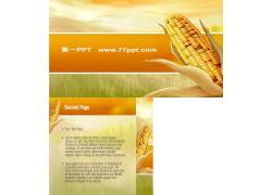 丰收的喜悦玉米背景ppt模板