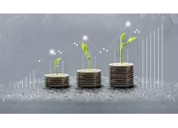 硬币堆积小植物,㓜木