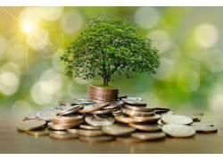 堆积的硬币树木