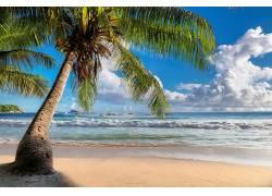 耶稣海洋白云沙漠树木